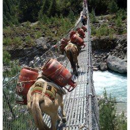 The Donkey Bridge