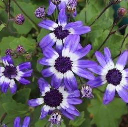 My Purple Flower Moment